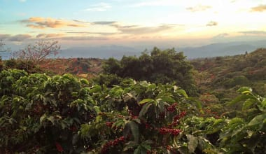 Coffee-finca-volcan-azul-marsellesa