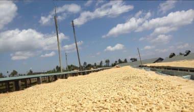 Coffee-gatuya-aa