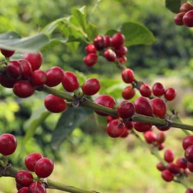 Coffee-omar-herrera-soto