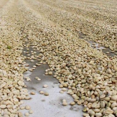 Coffee-rodrigo-cortez