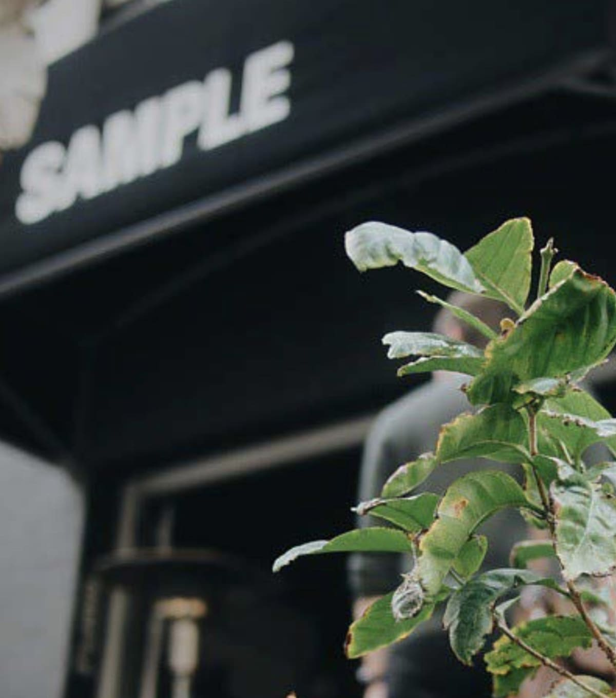 Sample Coffee Surry Hills tree and espresso bar.