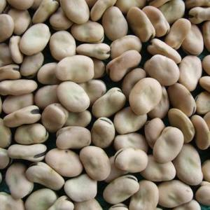 Photo of Beans - Aquadolce (Fava) - 1kg