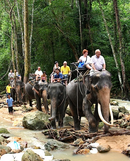Program A : Elephant Trekking