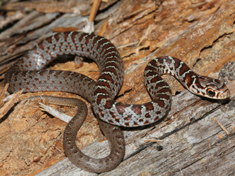 florida garden snakes poisonous fasci garden
