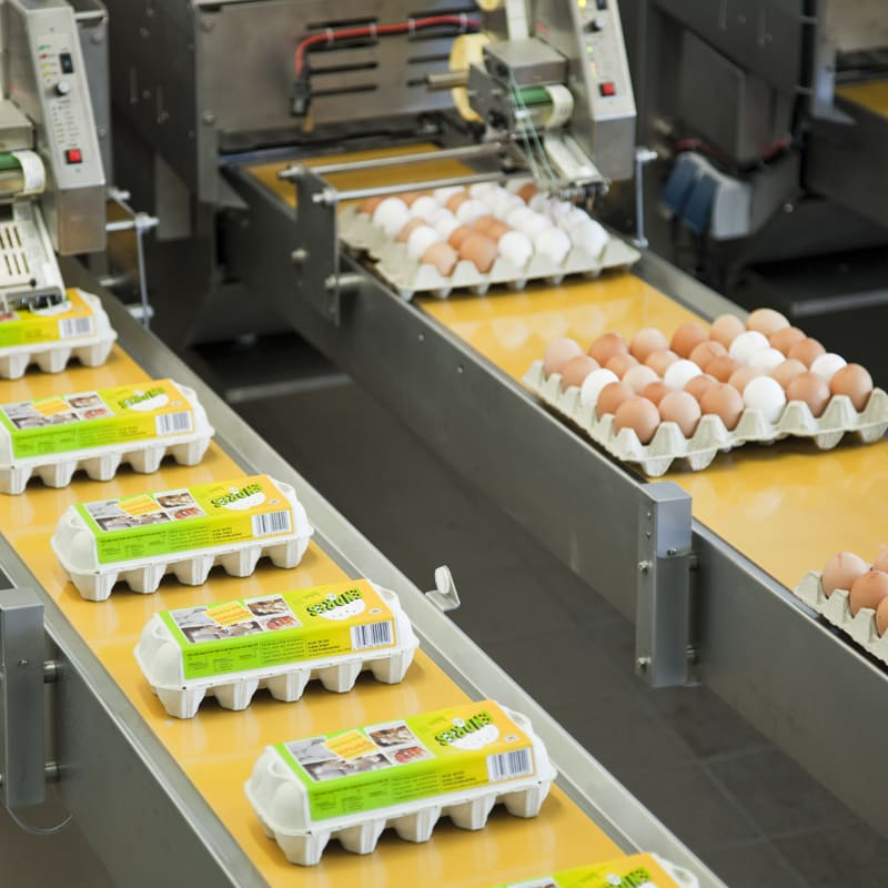 What is egg grading.jpg