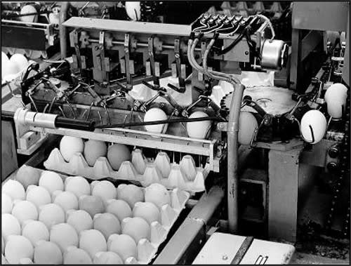 First patent and individual egg handling