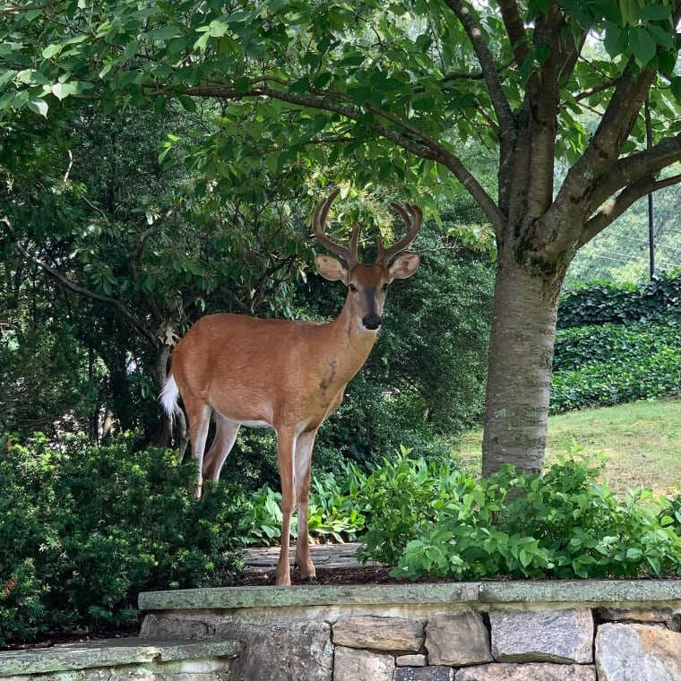Look who came to the Early Childhood Center for a visit. We let him know the kids will be back soon! #earlychildhoodcenter #sarahlawrencecollege #kober