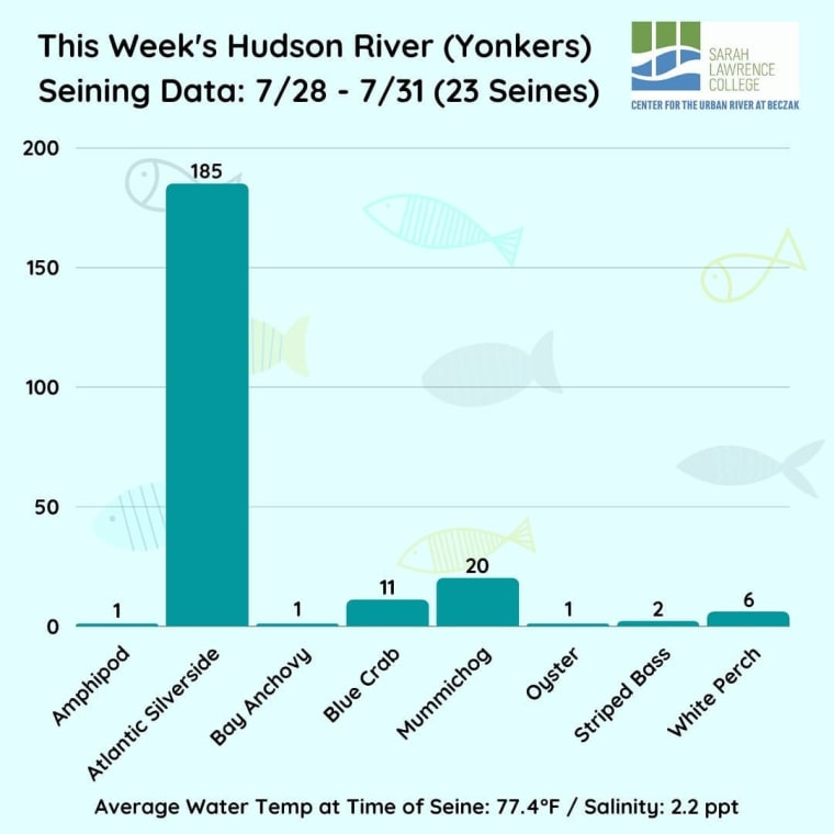Last week's seining data was once again headlined by Atlantic silversides with 185 caught! For the season, grass shrimp still lead the way with 588 caught. The salinity remained low, averaging around 2.2 ppt. #HudsonRiver #seining #research #fishdata