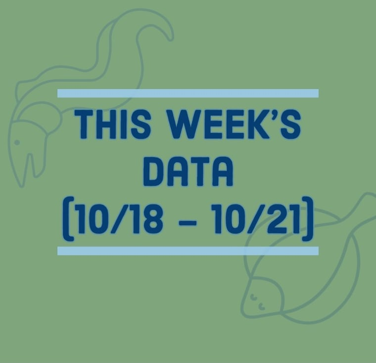 Results of last week's (10/18-10/21) seining data! A large 65cm American Eel and 10cm Winter Flounder where caught.