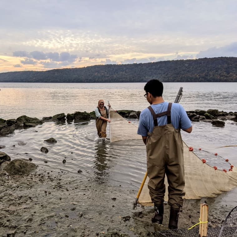 Getting some seining in before the storm. #hudsonriver #seining #research #fishcounts #yonkers