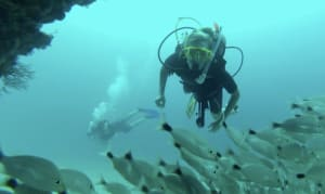 Sayulita Diving: Scuba & Snorkeling Underwater Adventures