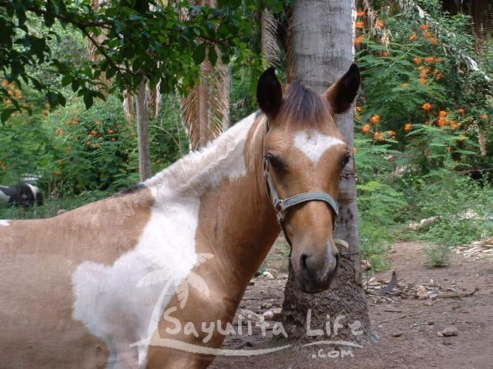Painted Ponies Equestrian Center just outside of Sayulita, Nayarit