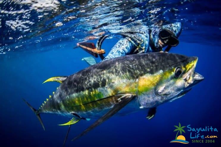 Spearmex Luxury Fishing Adventures in Sayulita Mexico