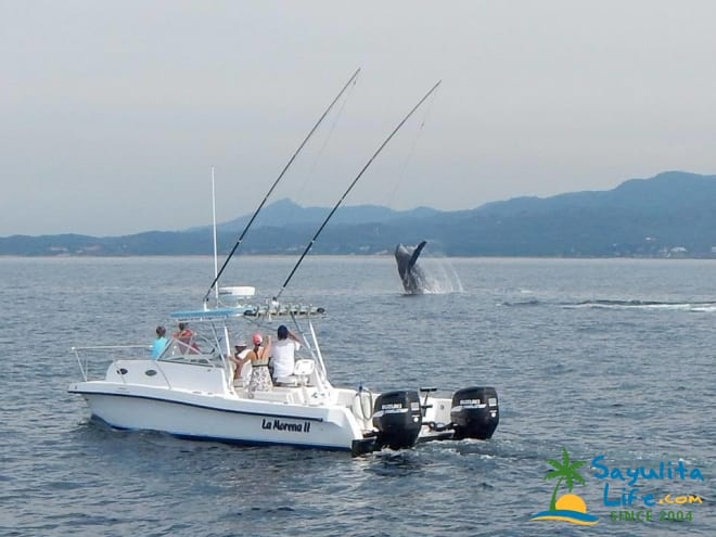 La Morena Sportfishing Tours in Sayulita Mexico
