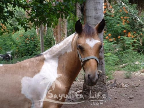 Painted Ponies in Sayulita Mexico