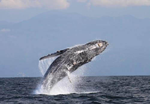La Orca De Sayulita in Sayulita Mexico