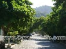Miramar Hilltop for sale in Sayulia Mexico