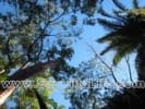 Great Jungle Lot With View for sale in Sayulia Mexico