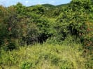Lots In Higuera Blanca for sale in Sayulia Mexico