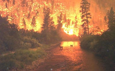 Image: Wildfire with two deer