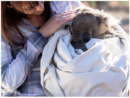 Dr Valentina Mella with a koala