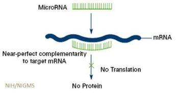 Image result for microRNA