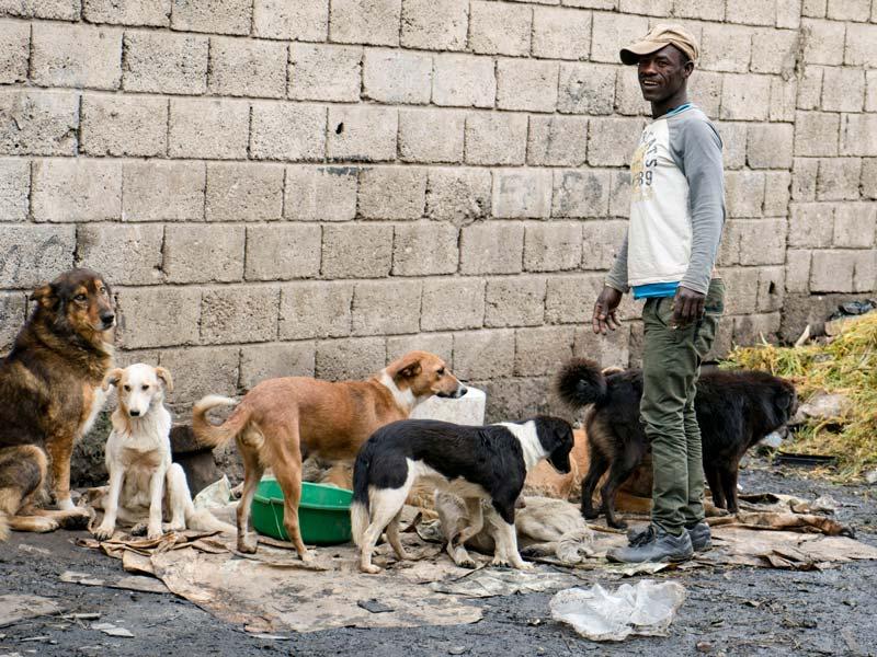 End global rabies
