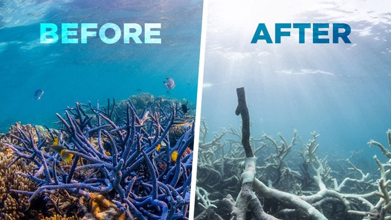 Image result for coral reefs dying before and after