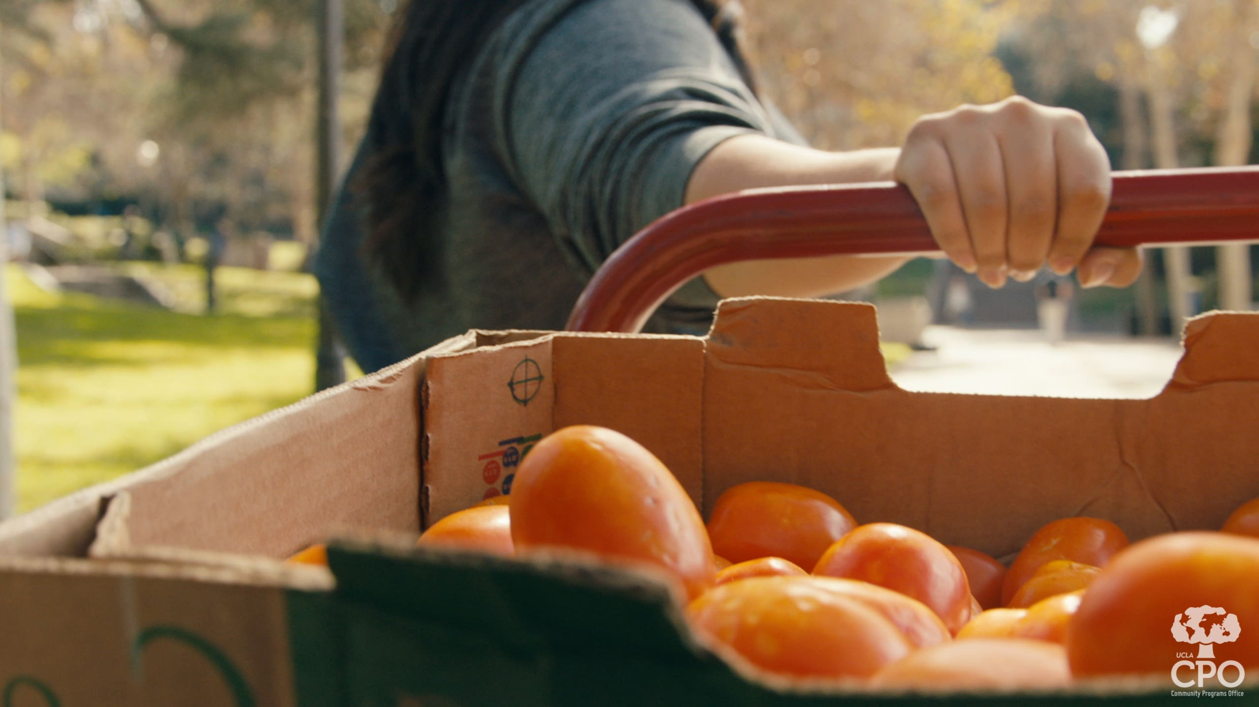 Students bring fresh produce to the CPO Food Closet