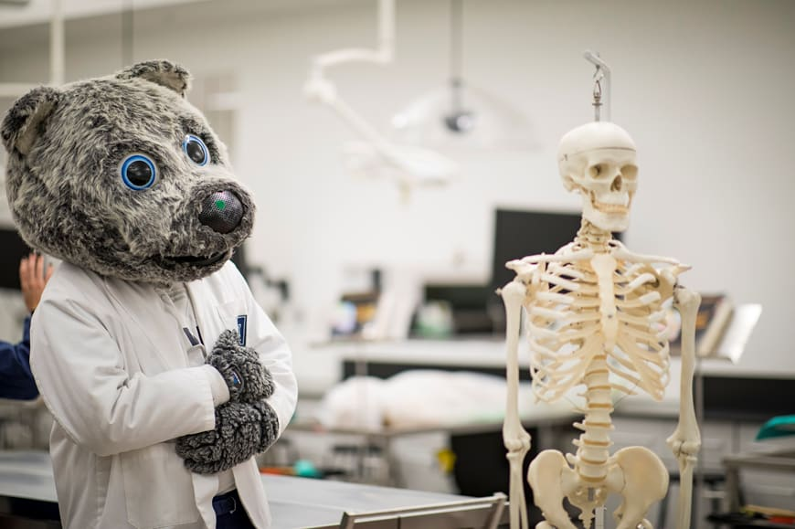 Alfie the wolf in medical lab