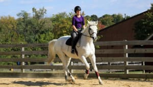Maryland Equestrian Club - Beginner Horse