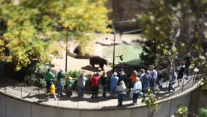 The Bear Habitat Enrichment Initiative