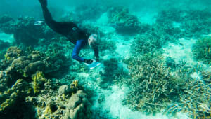 3D Coral Reef Research