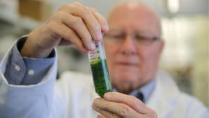 Milton Sommerfeld Fund to Advance Algae Research