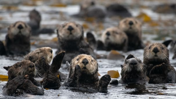 Help Our Bio Dept Protect Baby Otters from Oil Spills! Image