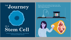 The Journey of Stem Cells