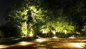 Light Up the Arboretum