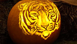 Keep the Pumpkin Carve Alive