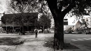 Decode Auburn Oaks' DNA