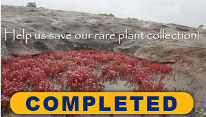 Save the Emory Herbarium Rare Plant Collection