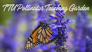 Native Plant and Pollinator Teaching Garden