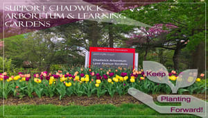 Support Chadwick Arboretum & Learning Gardens