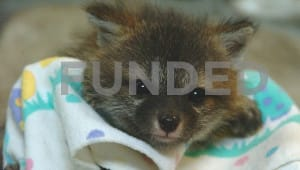 Support Baby Animals at Tufts Wildlife Clinic