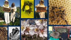 California Master Beekeeper Program Online