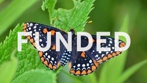 Bring the Baltimore Checkerspot Butterfly Back to Campus