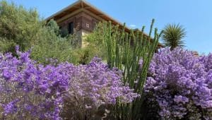 Enhancing Visitor Experience at the Chihuahuan Desert Gardens