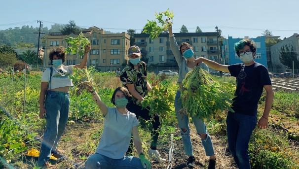 Berkeley Student Farms Image