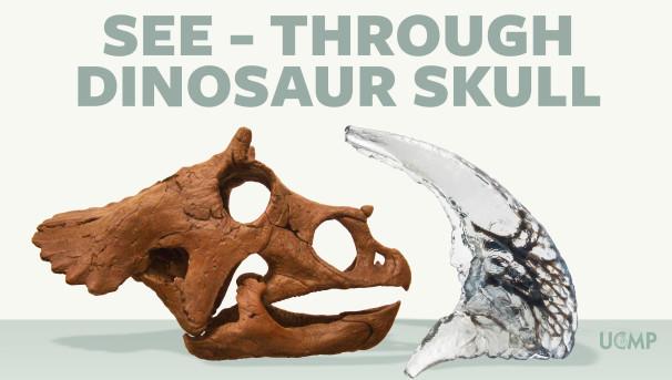 UC Museum of Paleontology | See-through Dinosaur Skull Image