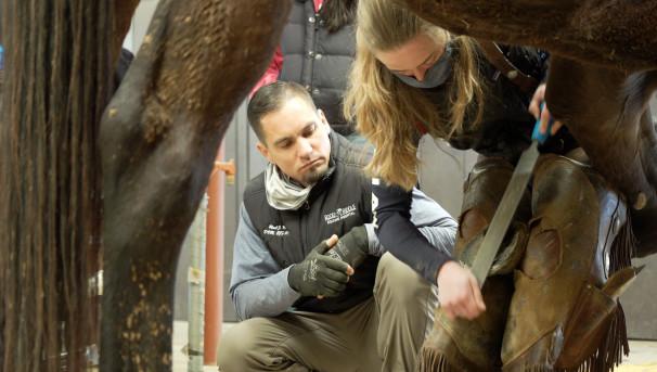 CSU Equine Veterinary Podiatry Initiative Image