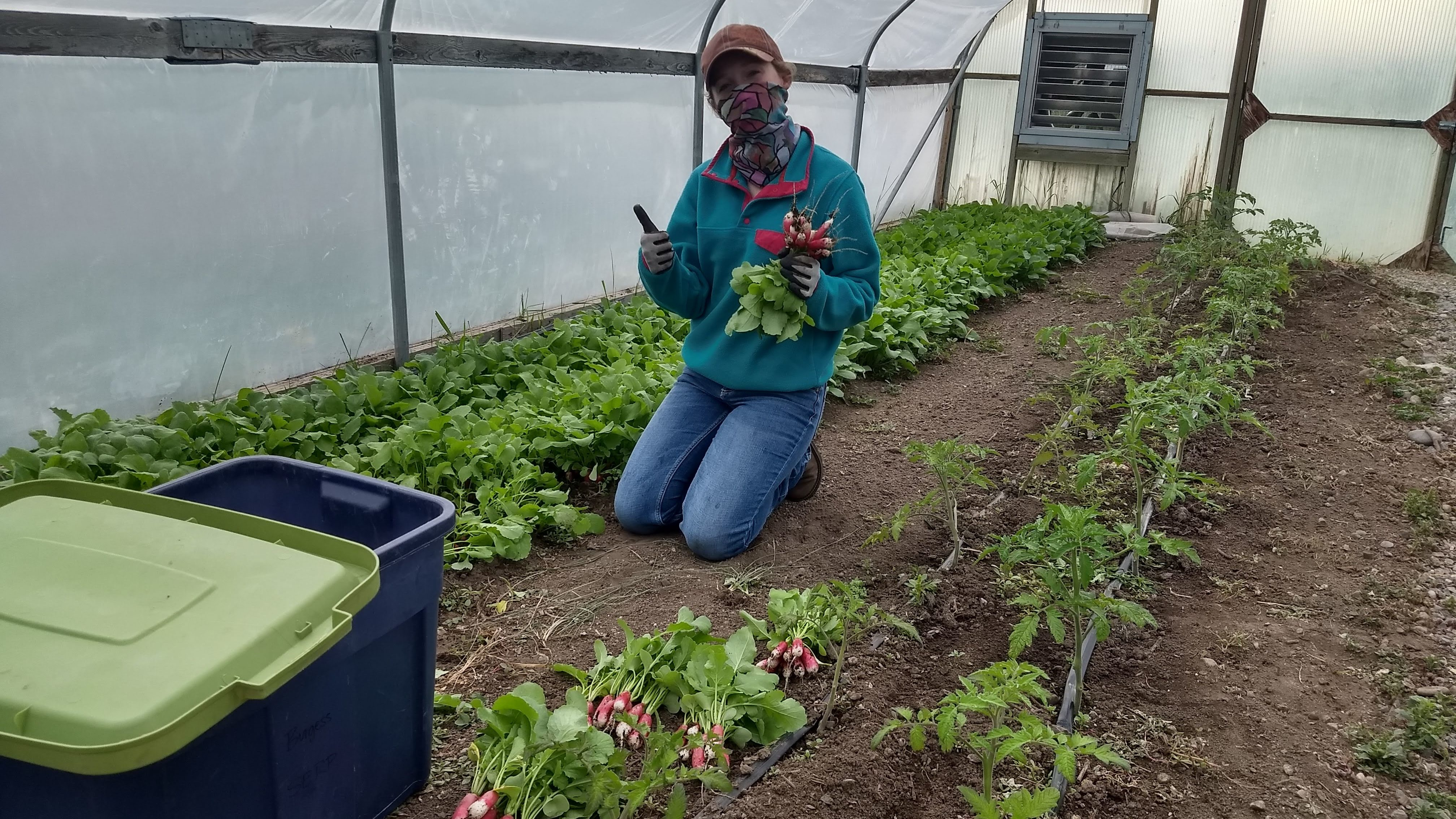 Student working in the greenhouse